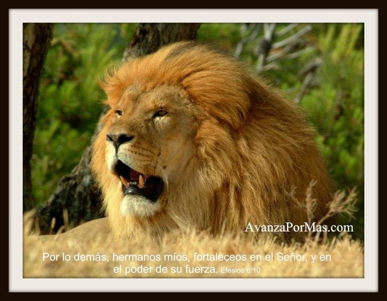 imagenes cristianas de leones con leones