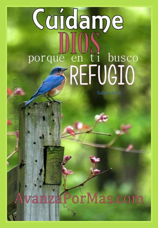 Postal Cuidame Dios Porque En Ti Busco Refugio