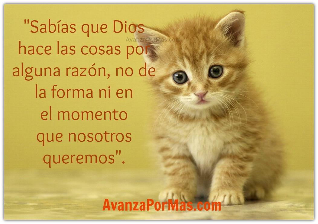 Frases Bíblicas: Azucena Gil